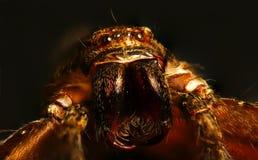 蜘蛛纲的动物 免版税库存图片