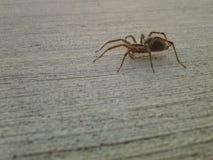 蜘蛛纲的动物 库存图片