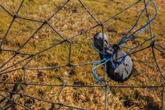 蜘蛛编织一个网络 图库摄影