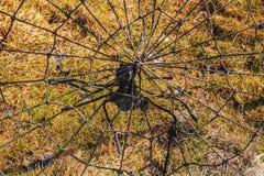 蜘蛛编织一个网络 库存照片