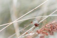 蜘蛛编织一个网 库存图片