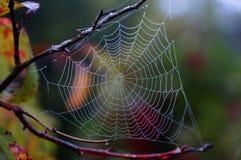 蜘蛛编织了一个网 免版税库存照片