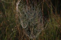 蜘蛛网。 免版税库存照片
