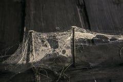 蜘蛛网和两个生锈的钉子三个委员会 免版税库存照片