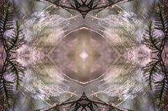 从蜘蛛网和冷杉的万花筒样式在早晨太阳光分支 免版税库存照片