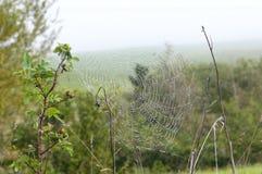 蜘蛛网和露水5 库存照片
