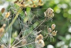 蜘蛛网在庭院里 库存照片