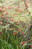 蜘蛛网在庭院里 免版税图库摄影
