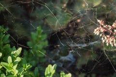 蜘蛛网在庭院里 免版税库存照片