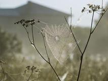 蜘蛛网在有薄雾的早晨 免版税库存照片