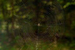 蜘蛛网在森林在夏天 免版税图库摄影