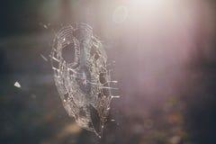 蜘蛛网在森林里 免版税库存照片