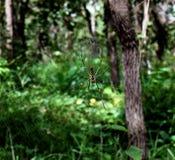 蜘蛛网在森林里 库存照片