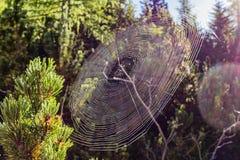 蜘蛛网在阳光下 免版税库存照片