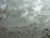 蜘蛛网在雨中 免版税图库摄影