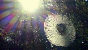 蜘蛛网在雨以后的森林 免版税库存照片
