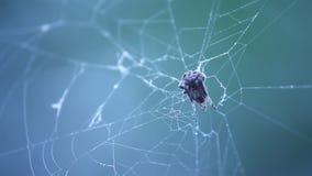 蜘蛛网宏观射击  影视素材