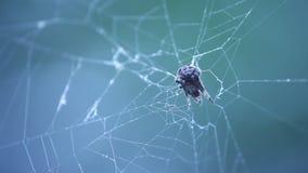 蜘蛛网宏观射击  股票录像