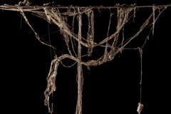 蜘蛛网或在黑背景隔绝的蜘蛛网 图库摄影
