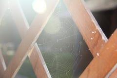 蜘蛛网接近在疏散轻的选择聚焦,拷贝空间 免版税库存照片