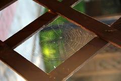 蜘蛛网接近在疏散轻的选择聚焦,拷贝空间 库存图片