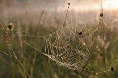 蜘蛛网早晨露水生气勃勃黎明 免版税库存图片