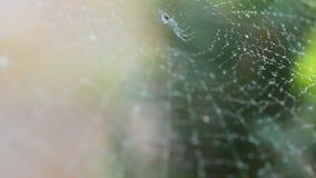 蜘蛛网湿从在关闭的早晨薄雾射击, 股票视频