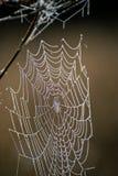 蜘蛛网特写镜头 蜘蛛在秋天领域的` s网在太阳发出光线在黎明和露滴明亮的背景  免版税图库摄影