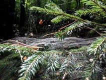 蜘蛛网特写镜头 大蜘蛛网特写镜头的射击与分支的在它在森林里 免版税库存图片