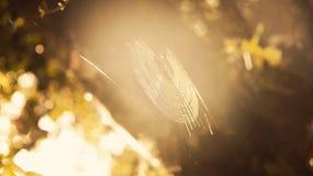 蜘蛛网的太阳! 库存照片