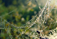 蜘蛛网露水 免版税库存照片