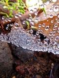 蜘蛛网露水Droplettes  图库摄影