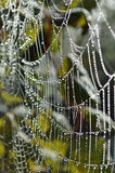 蜘蛛网,清早。 库存图片