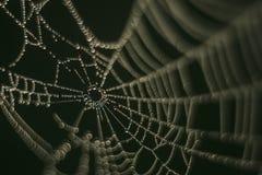 蜘蛛网,水滴,金刚石 免版税图库摄影