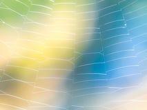 蜘蛛网-柔和的淡色彩 库存照片