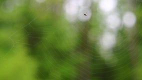 蜘蛛网 股票视频