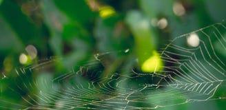 蜘蛛网 背景自然夏天 库存照片