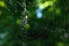 蜘蛛网 免版税图库摄影