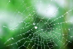 蜘蛛网 免版税库存照片