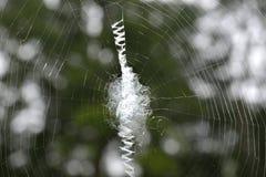 蜘蛛网01 免版税库存照片