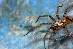 蜘蛛网 免版税库存图片