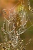 蜘蛛网 库存照片