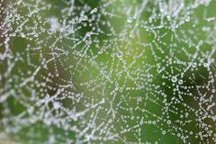 水蜘蛛网 图库摄影
