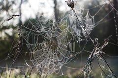 冻结蜘蛛网 库存图片
