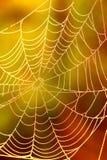 蜘蛛网A 免版税库存照片