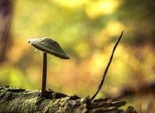 蜘蛛网spiderweb真菌蘑菇蜘蛛 免版税图库摄影