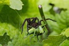 蜘蛛自然 库存图片