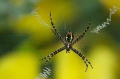 蜘蛛艺术 免版税库存照片