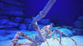 蜘蛛蟹 股票录像