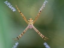 蜘蛛被编织的之字形网 免版税库存图片